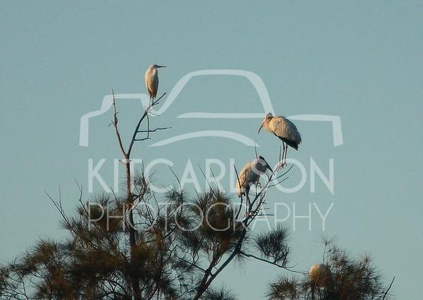 2012_11_24_K Carlson_46477