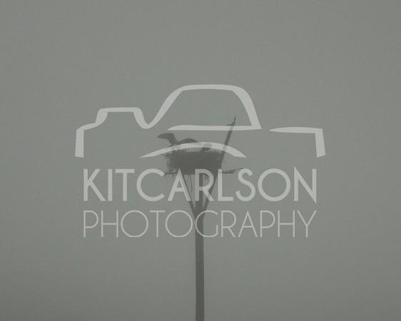 2012_12_09_K Carlson_46840