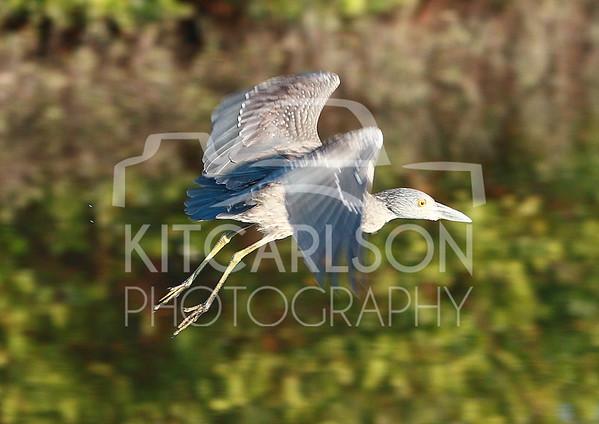 2012_11_24_K Carlson_46593