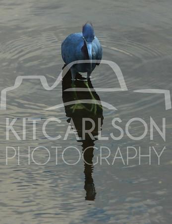 2013_02_10_KitCarlsonPhoto_059904