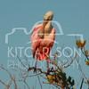 2012_11_24_K Carlson_46523