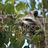 2012_11_19_K Carlson_46362