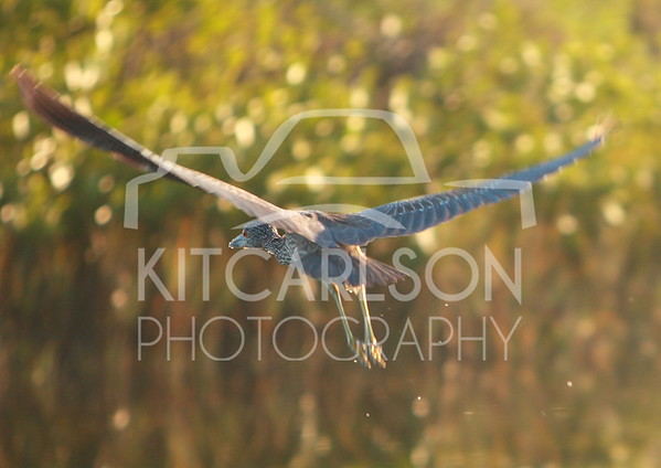 2012_11_24_K Carlson_46570