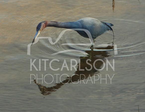 2013_02_10_KitCarlsonPhoto_059900