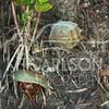 2012_11_19_K Carlson_46365