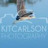 2012_11_24_K Carlson_46595