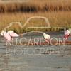2012_11_24_K Carlson_46470