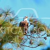 2012_11_19_K Carlson_46400