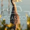 2012_11_24_K Carlson_46585
