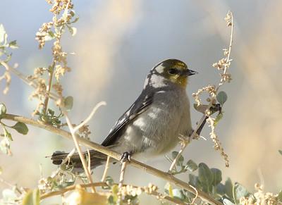 Gilbert Arizona Riparian Preserve,