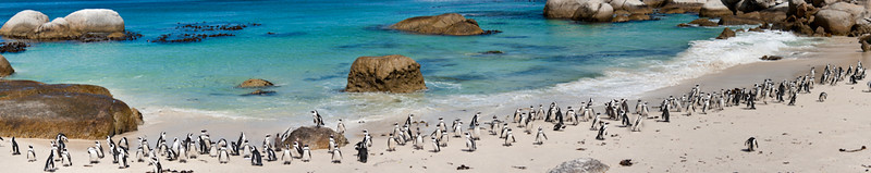 Boulders Beach Penguins 2-2