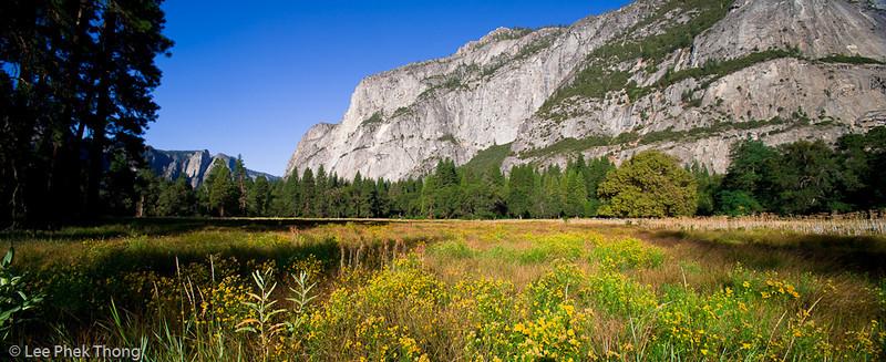 Panoramic view of El Capitan from the meadows. Yosemite valley, Yosemite National Park, California, USA