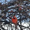 2-2-14 birds_0022sadj