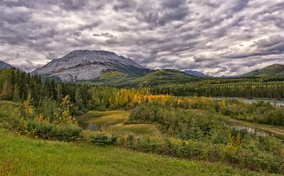 Moose Pasture