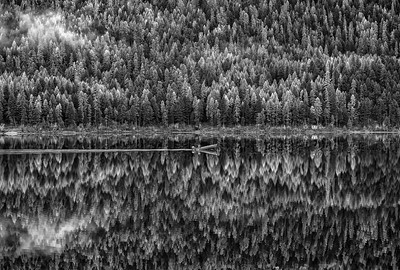 Monochrome Reflections