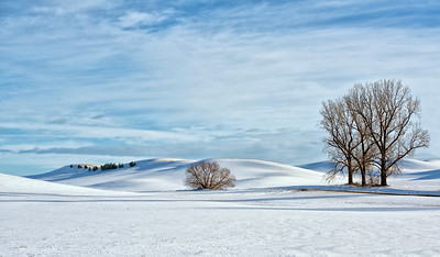 Palouse Winter Pastoral