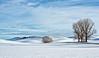 Winter Palouse Pastoral