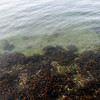 clear water - good visibility