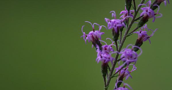 Flower 13