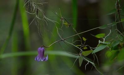 Flower 18