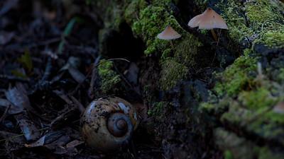 Mushroom 04