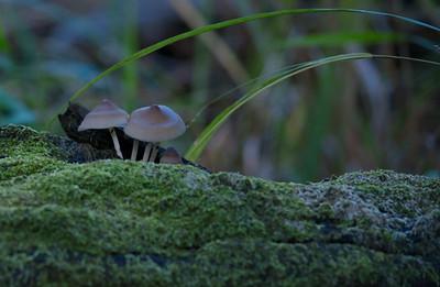 Mushroom 03