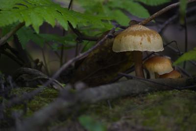 Mushroom 15