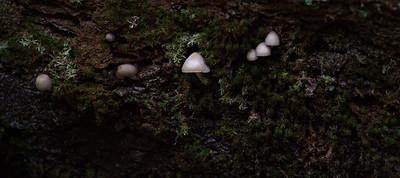 Mushroom 27