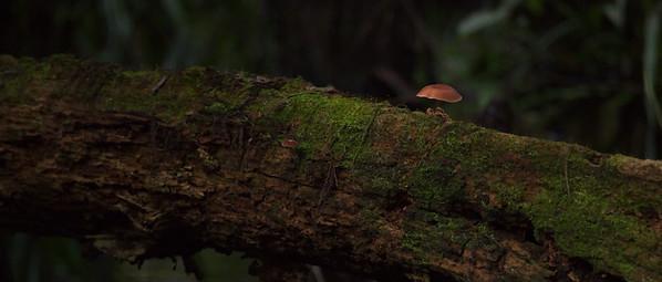 Mushroom 33