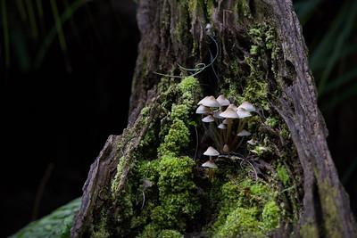 Mushroom 28