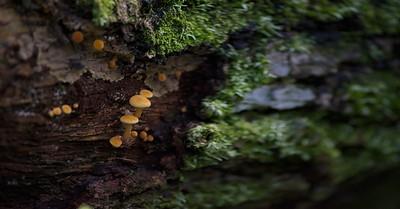 Mushroom 08