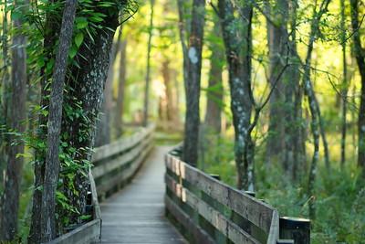 Trails 11