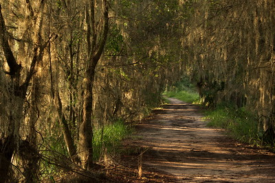 Trails 17