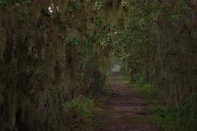 Trails 12