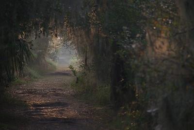 Trails 26