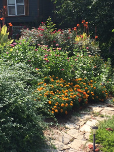 This is Diane Duquette's garden by her front walkway. You'll find marigolds, zinnia, knockout roses and cannas. At the bottom left is winter jasmine. Photo By Diane Duquette