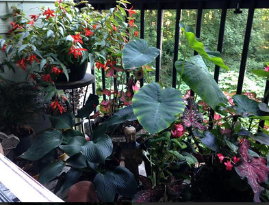 Jane Arney sent us a photo of her lovely patio garden in Atlanta's North Druid Hills community. Photo by Jane Arney