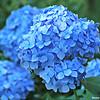 Abundance of Blooms