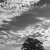 20150821_MKittrell_010014