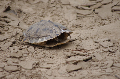 Found this turtle but nobody was home