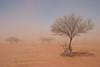 duststorm-4970