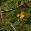 bowerbirds-9114