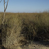 greygrasswren-4378