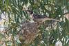 nfriarbird-5384