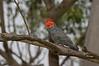 parrot-5853
