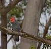parrot-5854