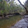 Azure Kingfisher habitat, Inglis River, Wynyard, Tasmania