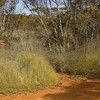 Spinifex mallee, Bindi, south of Cobar, NSW. Habitat of the Striated Grasswren.