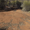 Bindi, 13/7/2002. Malleefowl mound