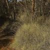 Bindi, 13/7/2002, Striated Grasswren habitat